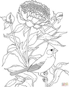 Free Printable Coloring PageWisconsin State Bird and Flower