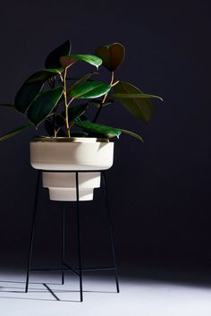 Choose the wrong houseplant and routine maintenance becomes a chore. Here are three handsome, low-effort species. Home Shelter, Long Winter, Low Lights, How To Relieve Stress, Houseplants, Effort, Empty, Routine, Planter Pots