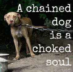 Spare the Dog a life of loneliness and pain, Ban the Chain! I just hate it when I see dogs chained up or locked in their crates all day.