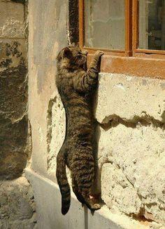 Peeping Tom [Cat]