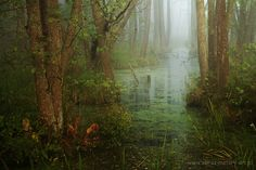 Wetlands of Biebrza National Park, Poland Wanderlust Travel, Shades Of Green, Mists, Poland, Places To See, Scenery, To Go, Country Roads, Nature
