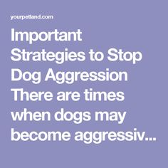 Important Strategies to Stop Dog Aggression There are times when dogs may become aggressive. This could happen when they deal with people or other dogs. This is one of their ways of dealing with fear. They want to be dominant in a way.