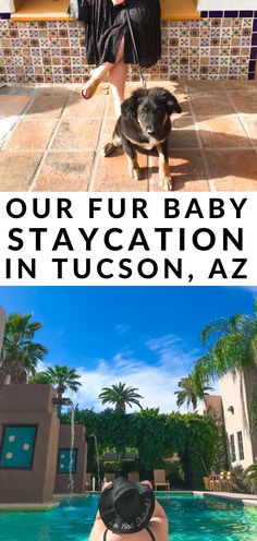 Our Fur Baby Staycation at Lodge on the Desert Perfect Image, Perfect Photo, Staycation Arizona, Digital Photography, Amazing Photography, Taking Pictures, Cool Pictures, Rule Of Thirds, Love Photos