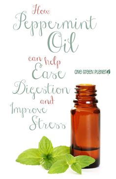 http://onegr.pl/1szzmd2 #vegan #vegetarian #peppermint #essential #oil #ease #digestion #improve #stress #health #tips