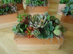 Colorful Succulent Plant Centerpiece Decor, Compact Size for Your Office