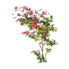 Arana Flipkens — альбом «CLIPART / CLIPART3 / Trees» на Яндекс.Фотках ❤ liked on Polyvore featuring flowers