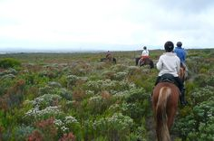 Book your stay at the Whale Coast Hotel and discover the Fynbos trails in Hermanus on Horeseback with the African Horse Company.