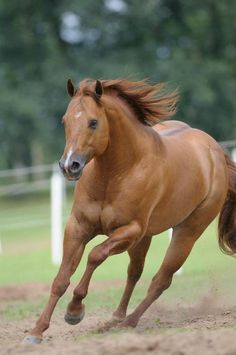 Strong and beautiful QH