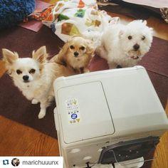 #Repost @marichuuunx with @repostapp  増えた(д) by animals_repostapp