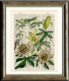 Passion Flowers Botanical print  Upcycled by PixelArtPrints, $10.00