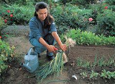 Préparer les récoltes d'automne et d'hiver