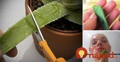 What happens when She rubs Aloe Vera on her Face will surprise You - Viral Plots Natural Medicine, Natural Health Remedies, Home Remedies, Aloe Vera Piel, Diy Beauty, Beauty Hacks, Aloe Vera For Face, Tips Belleza, Beauty Tips