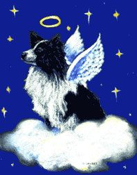 Border collie angel on Etsy--for my baby boy ❤