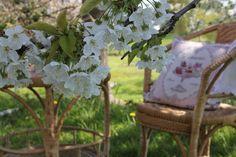 Lisas Fotowelt: Fest der Kirschblüte