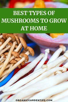 Grow Your Own Mushrooms, Growing Mushrooms At Home, Mushroom Grow Kit, Garden Mushrooms, Mushroom Fungi, Organic Vegetables, Growing Vegetables, Lacto Vegetarian Diet, Mushroom Cultivation