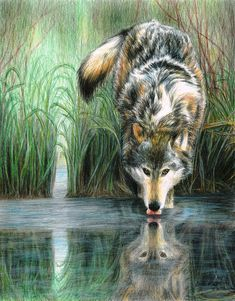 Afternoon Reflection Painting  - Carla Hurt Colored Pencil