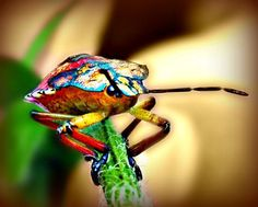 Colorful Bug Photography Insect,green,weird,Gifts under