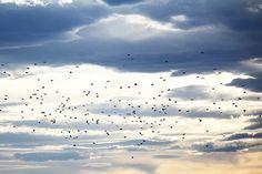 風の対流 by SaiSakaki, via Flickr