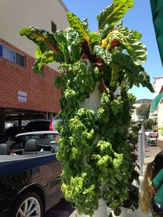 Cultivo de hortalizas en columna