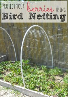 Bird netting - See this and more at: fabulesslyfrugal.com