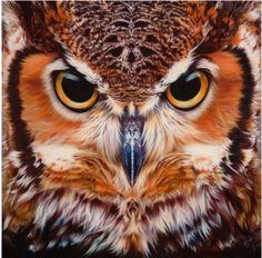 Beautiful Great Horned Owl Face