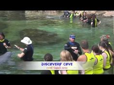 Discovery Cove Dolphin Experience - YouTube