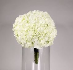 classic hydrange: <span>a simple bouquet of white hydrangea secured with a satin ribbon</span>