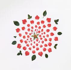 Exploded-flowers_04.jpg