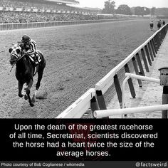 Weird Facts — Upon the death of the greatest racehorse of all.--> that's sweet but doesn't that mean the horse should have had more heart attacks? Wow Facts, Wtf Fun Facts, Random Weird Facts, Weird History Facts, Amazing Facts, Random Stuff, My Horse, Horse Love, The More You Know