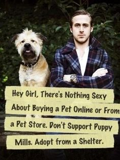 Ryan Gosling meme - Funny and TRUE: Hey girl, there's nothing sexy about buying a pet online or from a pet store. Adopt from a shelter. Celebrity Dogs, Pets Online, Puppy Mills, Ryan Gosling, Hey Girl, Shelter Dogs, Rescue Dogs, Look At You, Pet Store