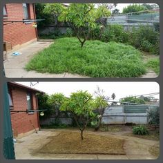 Garden Clean-up. Lawn mowing, edging, weeding, spraying, pruning and general tidy.   What can Trusted do for you?
