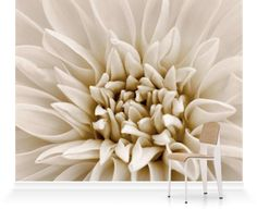 Dahlia Tiptoe from the Clive Nichols collection. Black And White Sepia Tone Image Of Dahlia Tiptoe (Miniature Flowered Decorative) Canvas Art Prints, Canvas Wall Art, Wall Art Wallpaper, Statement Wall, Unique Image, Pink Flamingos, Original Image, Dahlia, Wall Murals