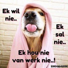 Bull Dog Ingles, Afrikaanse Quotes, Pug Love, Good Morning Quotes, Pugs, Funny Animals, Funny Quotes, Humor, Motivation