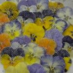 Crystallised edible Violas in a mixed box of all available colours. Unique Flowers, Edible Flowers, Crystal Flower, Growing Flowers, Beautiful Gardens, Color Mixing, Special Events, Unique Gifts, Centerpieces