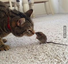 My cat doesn't like to kill little creatures, so I come home to scenarios like this...