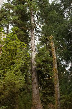 Hall of Mosses Trail - Check out the free plant identification mobile app at GardenAnswers.com