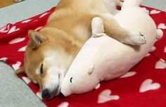 Maru and His Favorite Toy Are Too Cute for Words