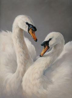 Portfolio of bird art by Vanessa Foley Beautiful Swan, Beautiful Birds, Animals Beautiful, Animal Paintings, Animal Drawings, Cygnus Olor, Swan Painting, Ink In Water, Animal Totems