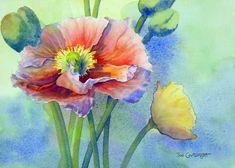 Watercolor flower paintings gallery by Joe Cartwright, Australian watercolor artists.Watercolour flower paintings. How to paint flowers. Australian artists.