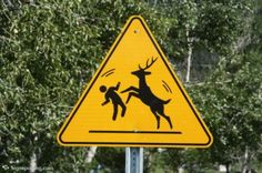 Beware! Deer disco ahead! #HeadsofState