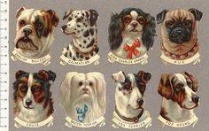 Hundhuvuden-8-st | Flickr - Photo Sharing!