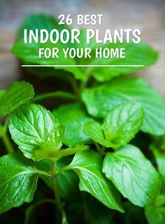 26 Best Indoor Plants for Your Home