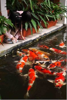 Children feeding koi - Cameron Highland Resorts, Malaysia. Lots of Gosanke.