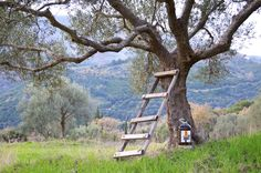 Our Extra Virgin Olive Oil in a big plastic 5lt bottle! The Melia Olive Oil is produced and collected by the Association of Messinia, near Kalamata which is consisted by local producers. The acidity of Melia Olive Oil is below 0,3% which is categorized as extra virgin olive oil, as it is below the maximum permissible limit, complying fully with the existing EU legislation (0 – 0.8%).