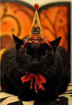 Happy Halloween...meow!