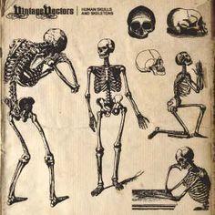 Human skulls & skeletons (& more free) vector sets