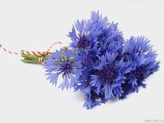 Friday Florals – Cornflowers (Centaurea Cyanus) » Alexan Events | Denver Wedding Planners, Colorado Wedding and Event Planning