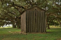 Tobacco Barn and Ancient Oaks Branchville Road Mitchell County GA Photograph Copyright Brian Brown Vanishing South Georgia USA 2014