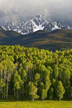 Mt. Sneffels and Spring Aspen - San Juan Mountains, CO