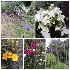 More July flowers.